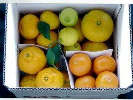 【ふるさと納税】【ふるさと納税】5種の柑橘詰め合わせセット(5kg箱入り) 熊本県産
