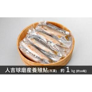 【ふるさと納税】人吉球磨産養殖鮎(冷凍) 約1kg 【魚貝類・魚・鮎・アユ】