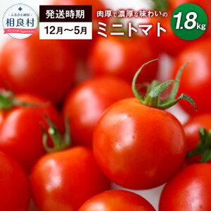 【ふるさと納税】相良村産 ミニトマト 1.8kg とよはら農園 熊本県産 12月から5月のみ発送 期間限定発送 送料無料