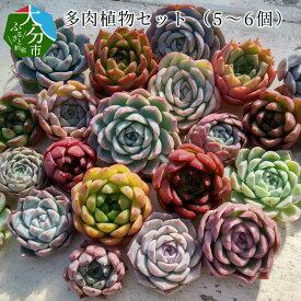 【ふるさと納税】多肉植物セット (5〜6個) R07006【大分県大分市】