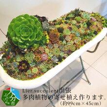 【ふるさと納税】Lier.succulent出張多肉植物の寄せ植え作ります。(約99cm×45cm)R07010【大分県大分市】