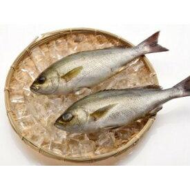 【ふるさと納税】「愛海の恵み」大分豊後水道産 天然イサキ(約2kg 2〜4本)