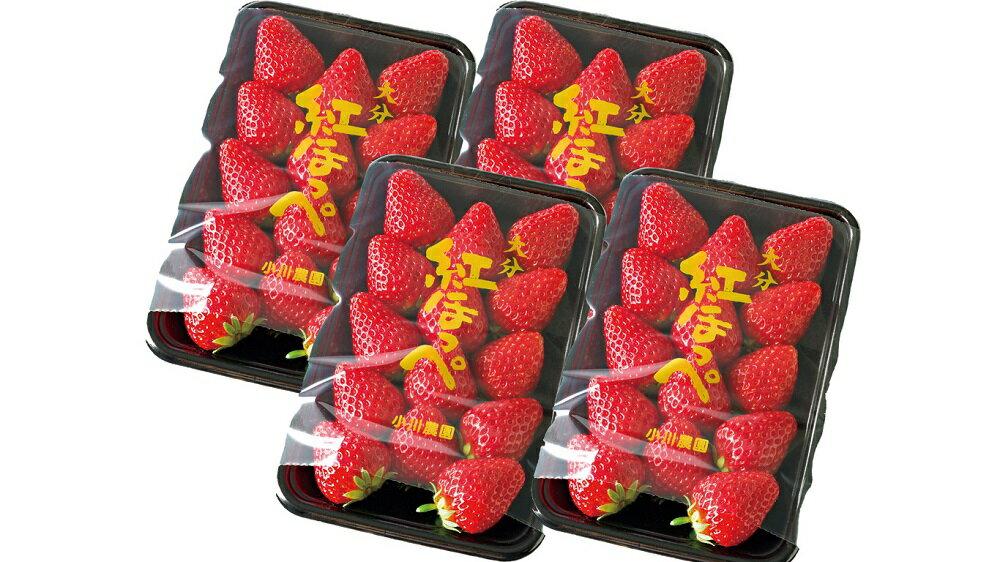【ふるさと納税】【先行予約】甘熟いちご「紅ほっぺ」・4パック入×1箱