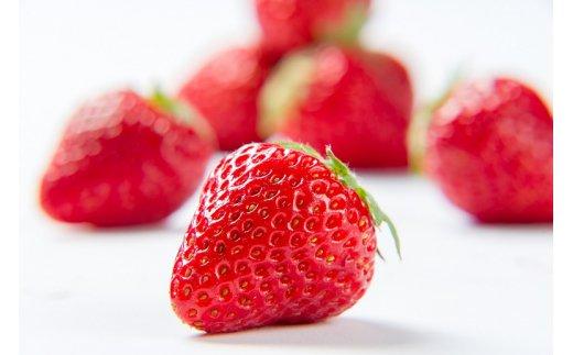 【ふるさと納税】【先行予約】甘熟いちご「紅ほっぺ」