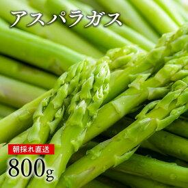 【ふるさと納税】グリーンアスパラガス(800g)【7月上旬〜9月下旬配送】