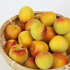 【ふるさと納税】【数量限定】ひらそ農園の完熟梅 3kg(南高梅) 予約 果物 フルーツ<04-A0002>