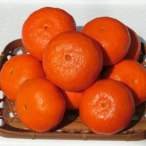 【ふるさと納税】A5051 ジューシーな甘さ!木戸農園のみかん(アンコール)3kg ※2月〜3月