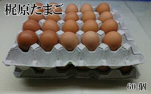【ふるさと納税】梶原たまご60ヶ入り タマゴ 60個 卵 鶏卵 鶏 産地直送 国産 九州産 冷蔵 送料無料
