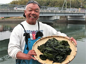 【ふるさと納税】国東半島の天然お刺身わかめ(2.5kg)