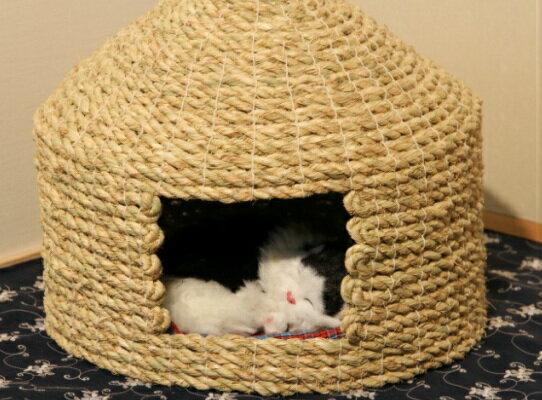 【ふるさと納税】愛猫の和風高級マンション!国東猫ちぐら(シングル)・通