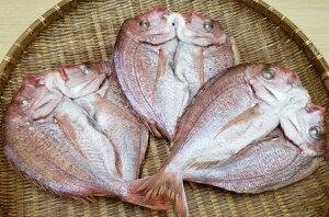 【ふるさと納税】驚愕の大きさ!訳あり天然鯛の一夜干し1.8kg