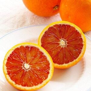 【ふるさと納税】ブラッドオレンジ「タロッコ」 約3.5kg(15〜16玉)【1093453】