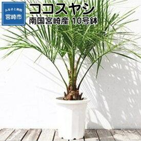 【ふるさと納税】南国宮崎産 ココスヤシ 10号鉢