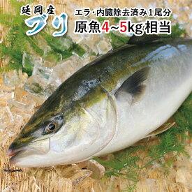 【ふるさと納税】ブリ 1尾 約4kg〜5kg 刺身 焼き魚 宮崎県延岡市 送料無料
