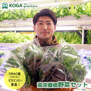 【ふるさと納税】高栄養価野菜セット