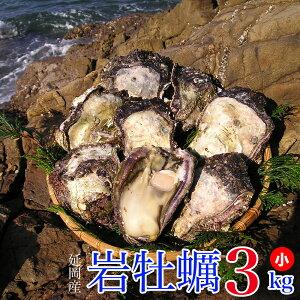 【ふるさと納税】延岡産天然岩牡蠣(生食用)3kg(小)(2020年4月から発送開始)