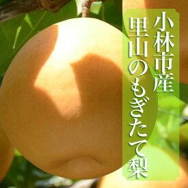 【ふるさと納税】里山のもぎたて梨 計3kg