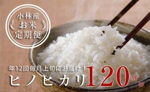 【ふるさと納税】【定期便:全12回】小林産ヒノヒカリ<10kg×12回>