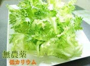【ふるさと納税】低カリウムレタス「スイーツレタス」6株〜10株