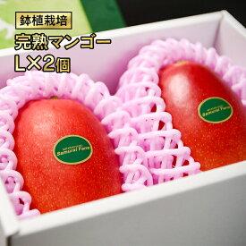 【ふるさと納税】完熟マンゴー L×2個(西都産)鉢植栽培【先行予約】