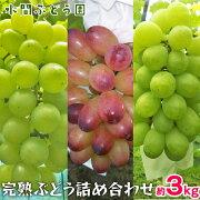 【ふるさと納税】完熟ぶどう詰合せセット(約3kg)