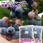 【ふるさと納税】【産地直送】冷凍ブルーベリー1kgブルーベリーファーム川崎
