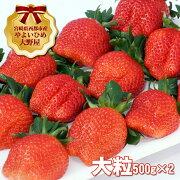 【ふるさと納税】宮崎県西都市苺大野屋やよいひめ大粒
