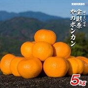 【ふるさと納税】宮崎県西都産宝財原やのポンカン5kg