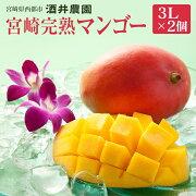【ふるさと納税】酒井農園西都産宮崎マンゴー3L×2個