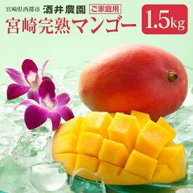 【ふるさと納税】酒井農園 完熟マンゴー1.5kg「ご家庭用」【数量限定】