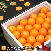 【ふるさと納税】宮崎県西都市産きんかんたまたまエクセレント1kg【先行予約・数量限定】
