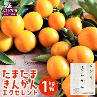 【ふるさと納税】たまたまきんかんエクセレント1kg箱宮崎県産完熟k金柑柑橘旬フルーツ果物くだもの予約九州国産送料無料