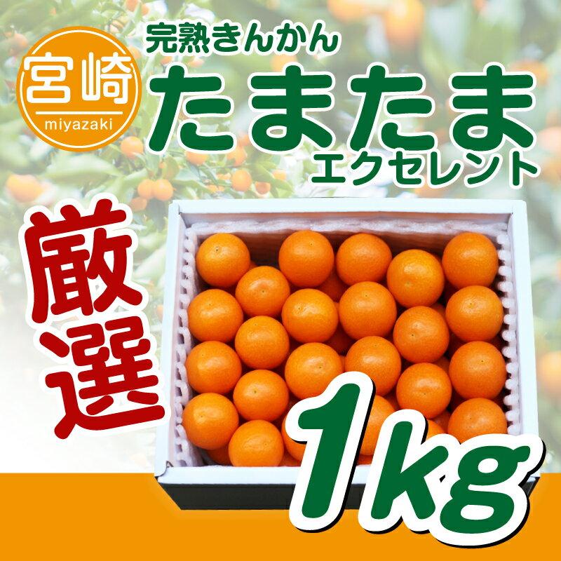 【ふるさと納税】宮崎県産 完熟きんかん たまたま エクセレント 1kg キンカン 金柑 フルーツ 果物 贈答