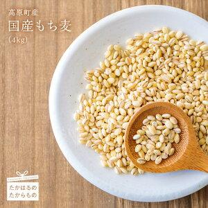 【ふるさと納税】宮崎県産特選 もち麦(4kg)  食物繊維が白米の20倍と豊富で、コレステロール低下や血糖値抑制が期待できるもち麦 自社栽培、自社収穫 ※送料無料