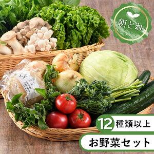 【ふるさと納税】お試し 旬 おまかせ 詰め合わせ 無農薬 減農薬 直送 採れたて 美味しい 新鮮 本日のお野菜セット(Lサイズ)