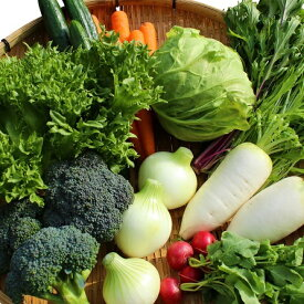 【ふるさと納税】本日のお野菜セット(Sサイズ)