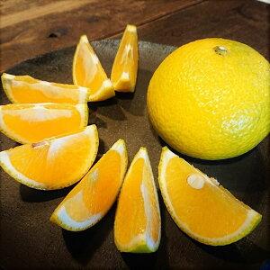 【ふるさと納税】希少柑橘「スイートスプリング」10kg(段ボール箱入り)【先行予約】