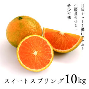 【ふるさと納税】希少 柑橘 スイートスプリング 10kg 段ボール箱 先行受付 ギフト 贈答 送料無料