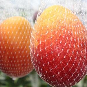 【ふるさと納税】B級品完熟マンゴー