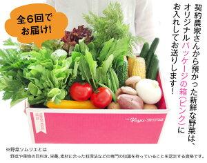【ふるさと納税】野菜ソムリエが選ぶ旬のこゆ野菜セット6ヵ月コース定期便5〜8種類送料無料盛り合わせ国産