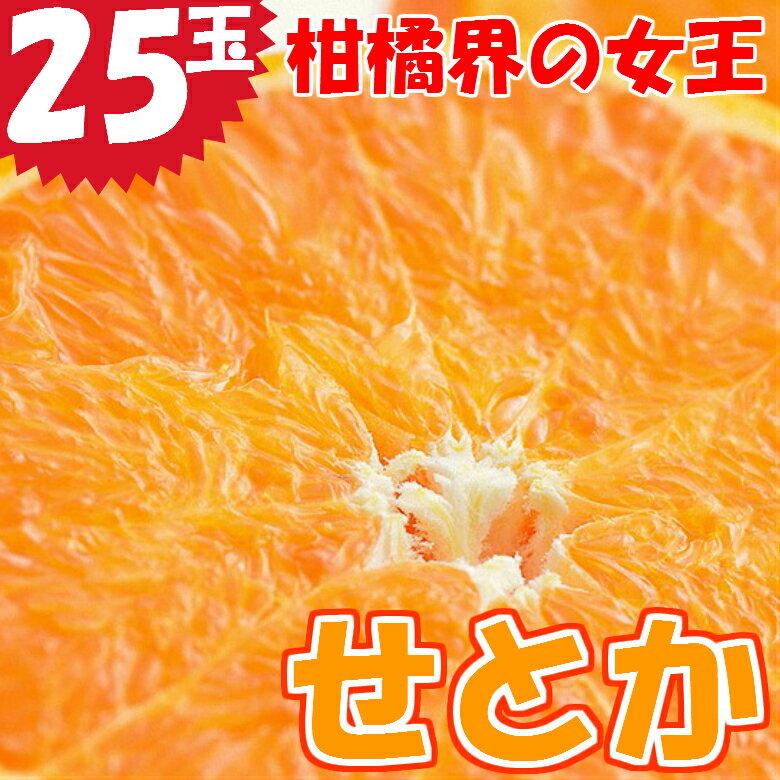 【ふるさと納税】宮崎県産 柑橘の女王せとか 25玉入り 平成31年2月中旬より受付順に出荷 ※収穫によるズレあり みかん ミカン 蜜柑 フルーツ
