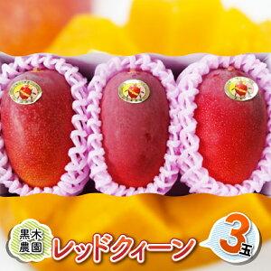 【ふるさと納税】レッドクイーンマンゴー3玉(合計1kg以上)