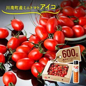 【ふるさと納税】川南町産ミニトマト「アイコ」600gと無添加ミニトマトドレッシングを栽培農家から直送!