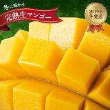【ふるさと納税】冬に味わう完熟マンゴー