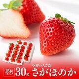 【ふるさと納税】宮崎県産苺!さがほのか