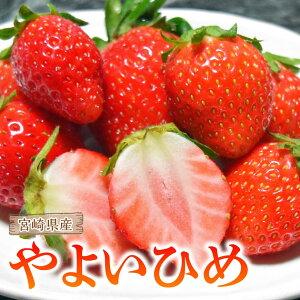 【ふるさと納税】合計1.8kg以上!甘さ・断面が違ういちご「宮崎県産やよいひめ」