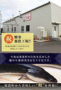 【ふるさと納税】あの!!うなぎ蒲焼5尾(計800g以上)都農町製造品