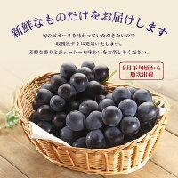 【ふるさと納税】都農町産ピオーネ2kg(3〜5房)