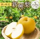 【ふるさと納税】『新興梨』計3kg(7〜9個)都農町産