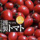 【ふるさと納税】てらさ小町謹製プレミアムトマト1.5kg